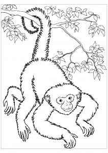 Cute Cartoon Monkey coloring page | Free Printable Coloring Pages | 300x212