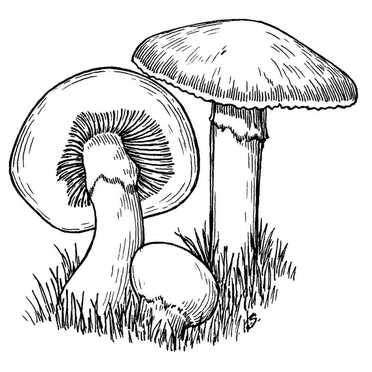 Beautiful Mushrooms coloring page