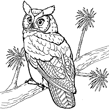 simple owls coloring page to print and color for free - Pictures Of Owls To Color