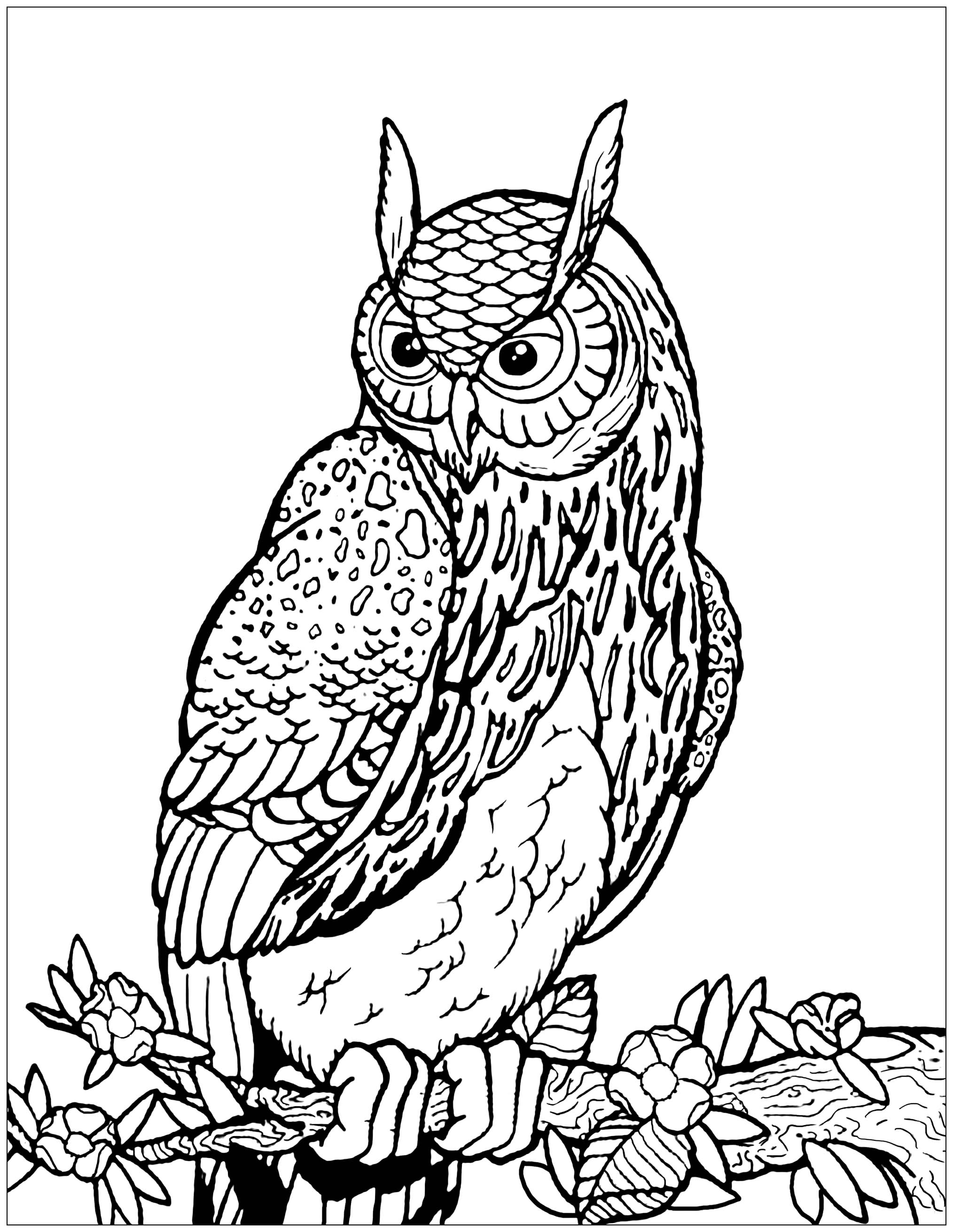 Owls to download for free - Owls - Coloring pages for kids
