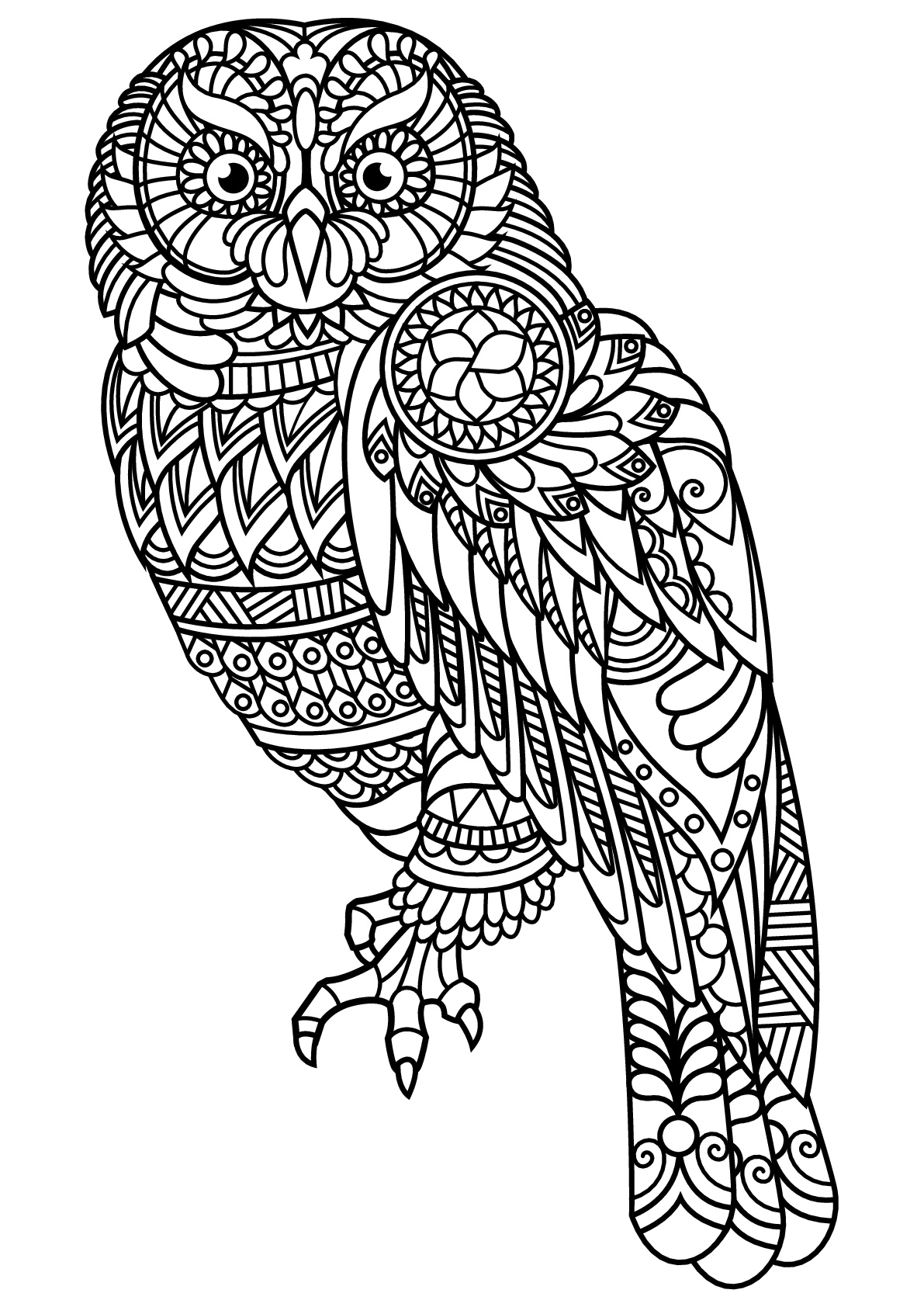 simple owls coloring page to print and color for free