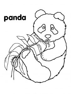 Coloring page pandas for children