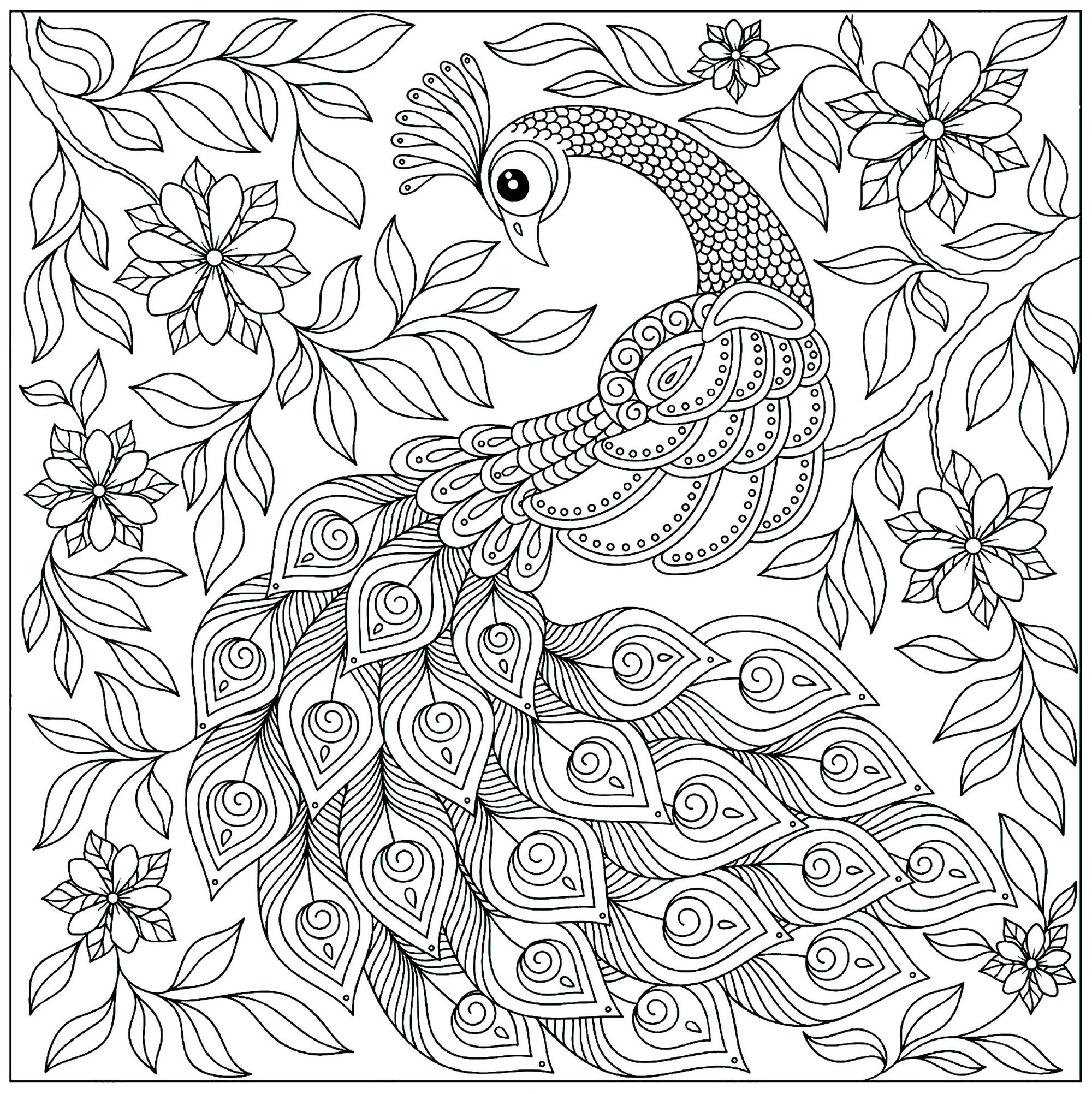 Peacocks to print - Peacocks Kids Coloring Pages