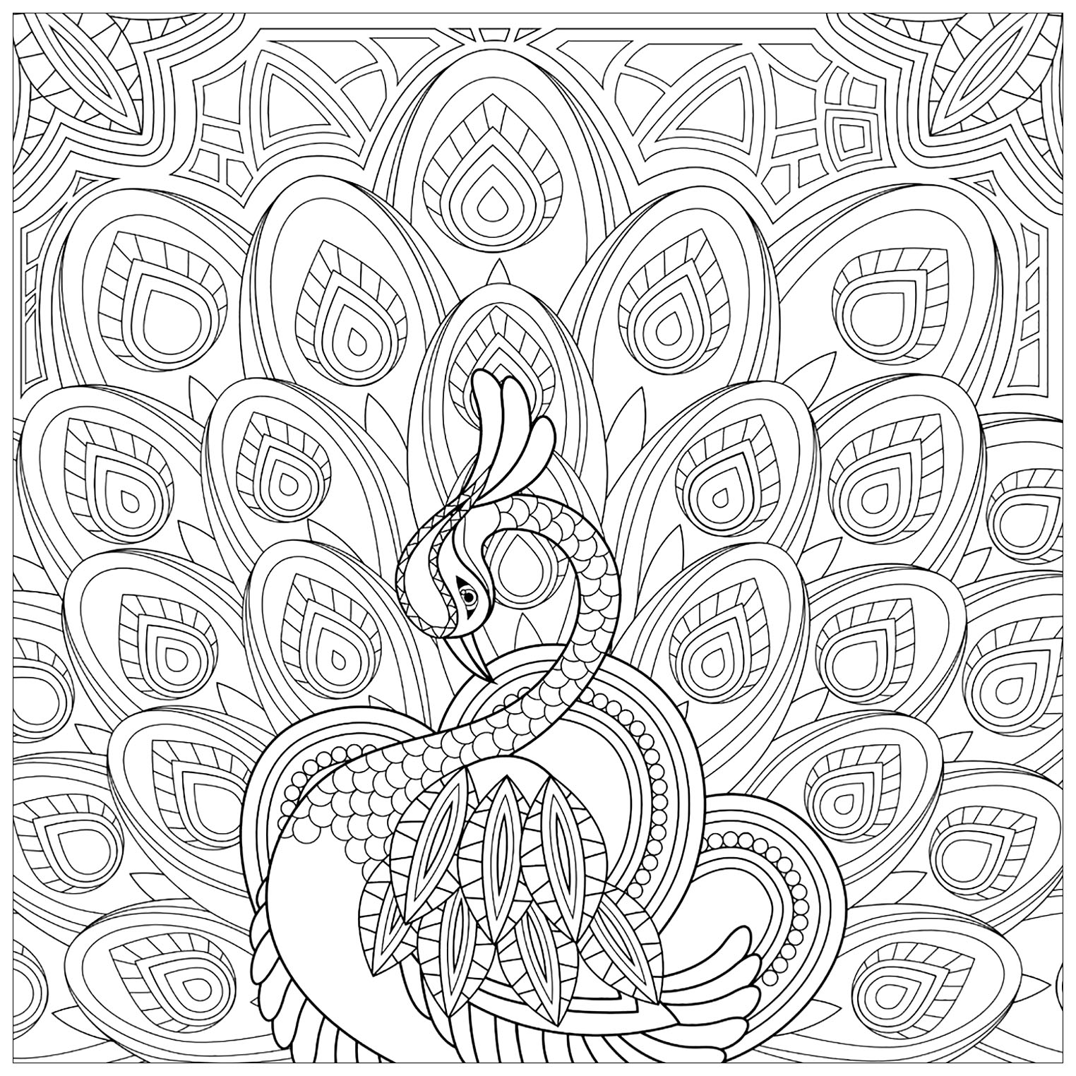 Peacocks free to color for children - Peacocks Kids ...