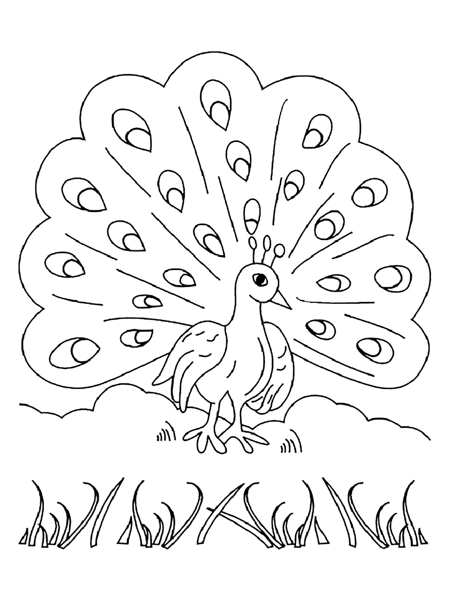 Funny Peacocks coloring page for children