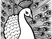 Peacocks Coloring Pages for Kids