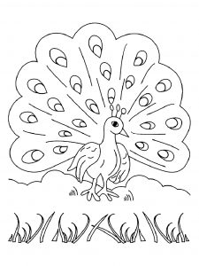 Coloring page peacocks free to color for kids