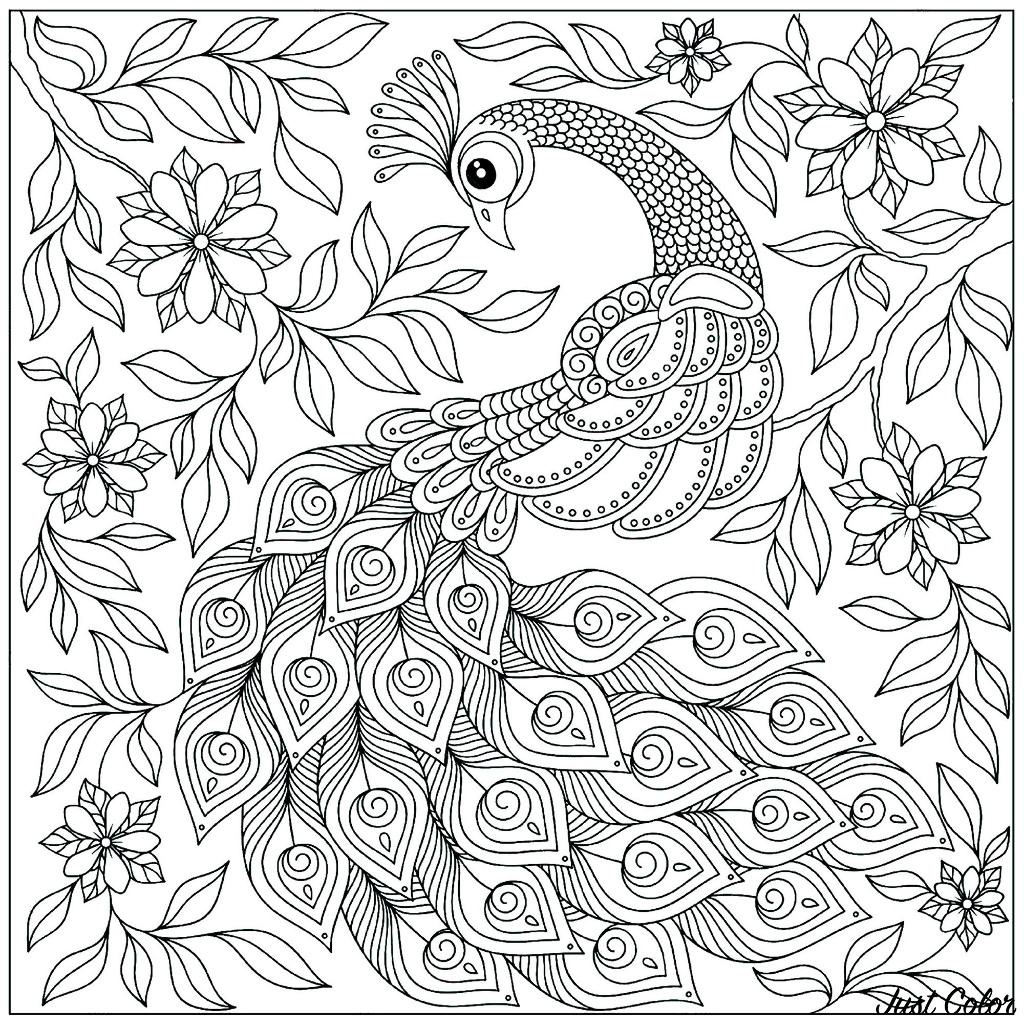 Incredible Peacocks coloring page to print and color for free