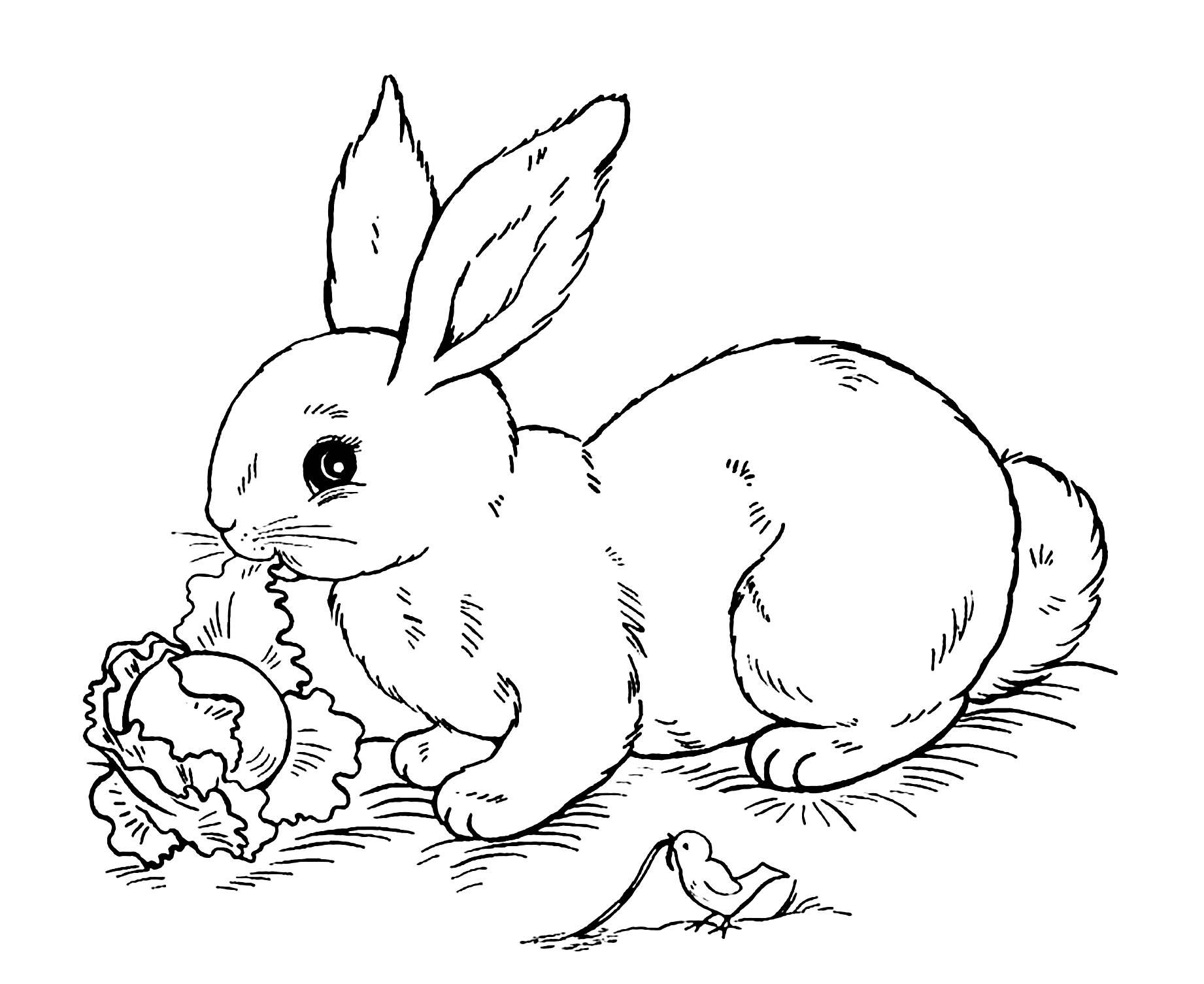Beautiful Rabbit coloring page