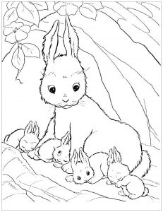 Coloring page rabbit to color for children