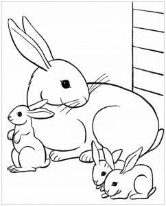 Coloring page rabbit to download