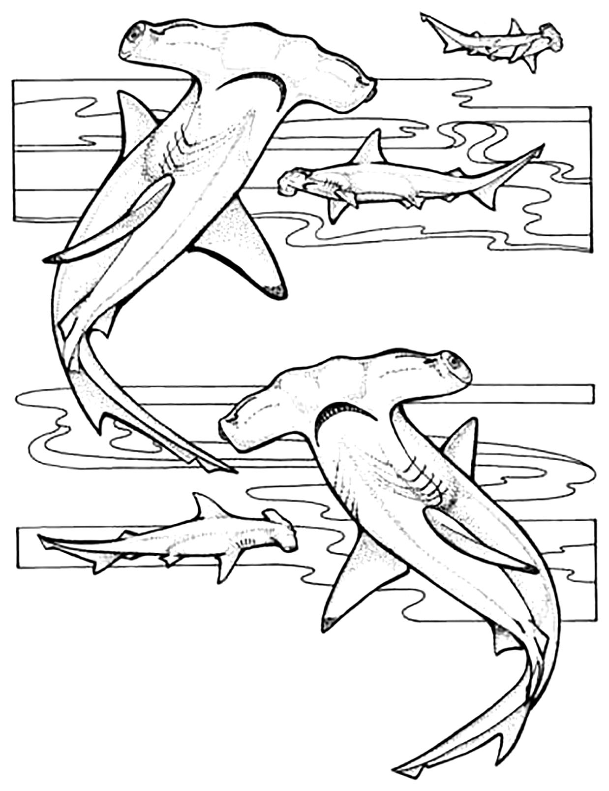 Free Sharks coloring page to download