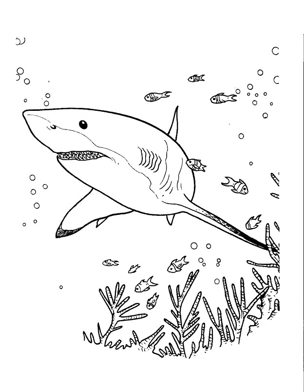 Simple free Sharks coloring page to print and color