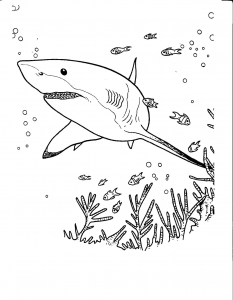 Coloring page sharks free to color for kids
