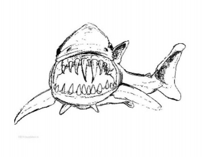 Coloring page sharks to color for kids