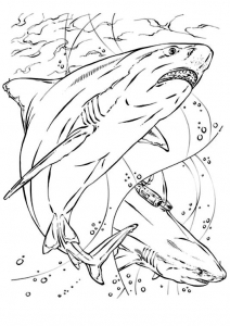 Coloring page sharks to print