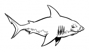 Coloring page sharks to download for free