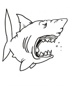 graphic relating to Free Printable Shark Coloring Pages titled Sharks - Cost-free printable Coloring webpages for small children