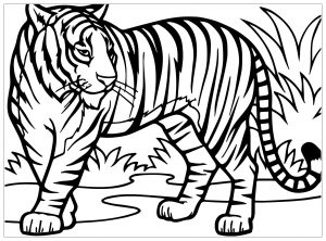 Coloring page tigers to color for kids