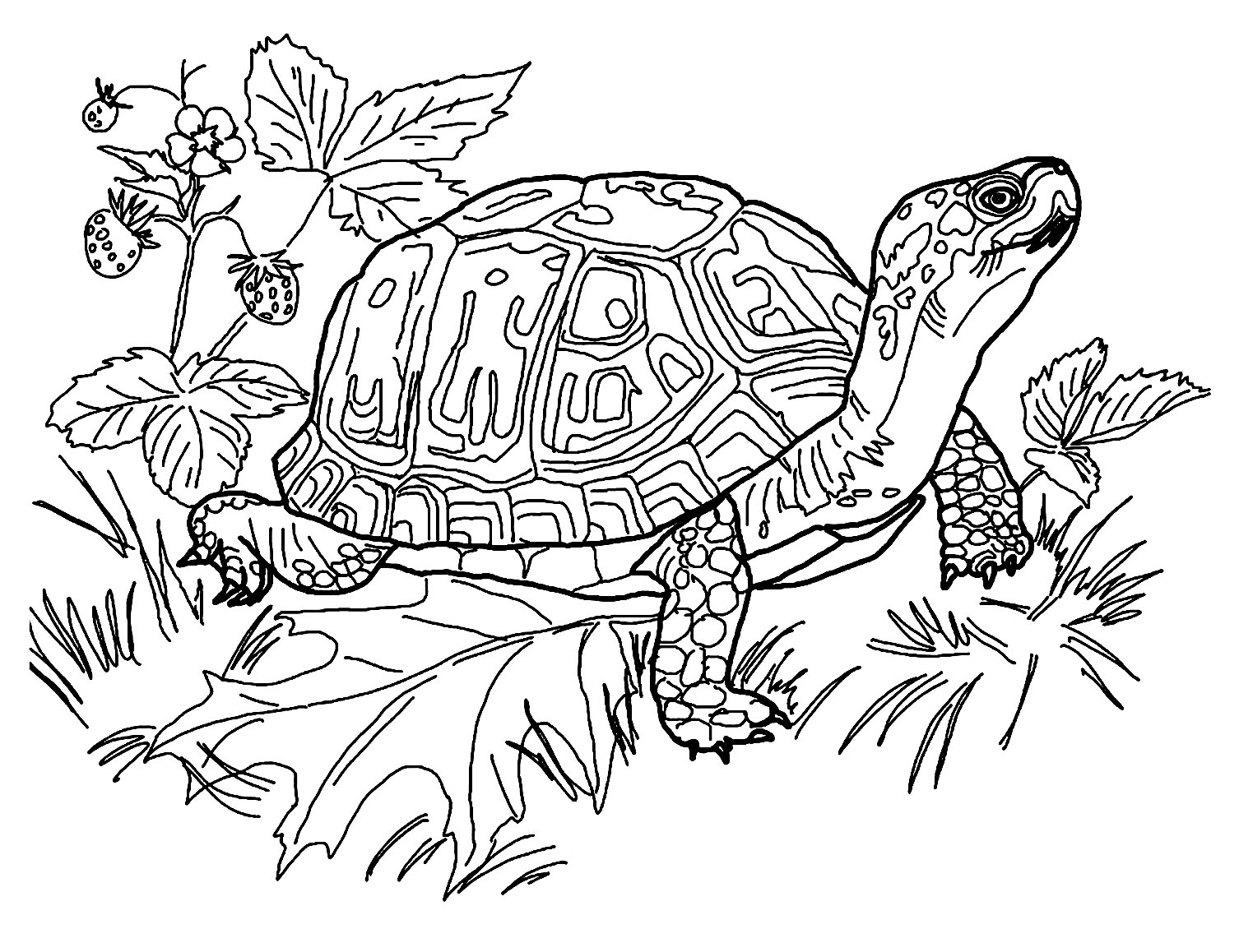 Turtles free to color for kids - Turtles Kids Coloring Pages