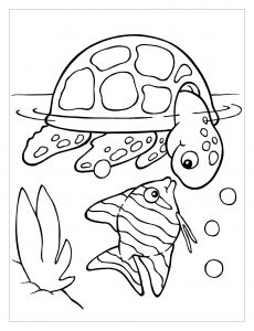 Coloring page turtles to color for kids