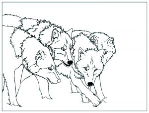 Coloring page wolf to color for kids
