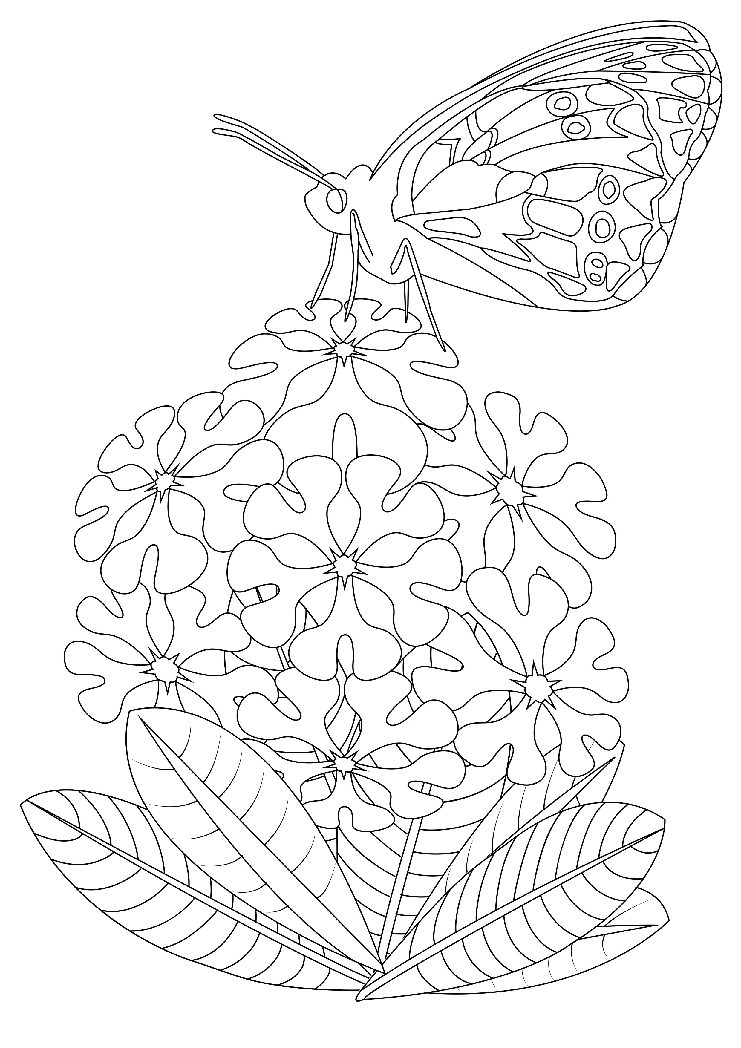 Butterfly on flowers 2 - Butterflies & insects Adult Coloring Pages