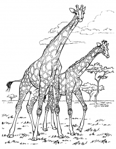 coloring-adult-africa-giraffes