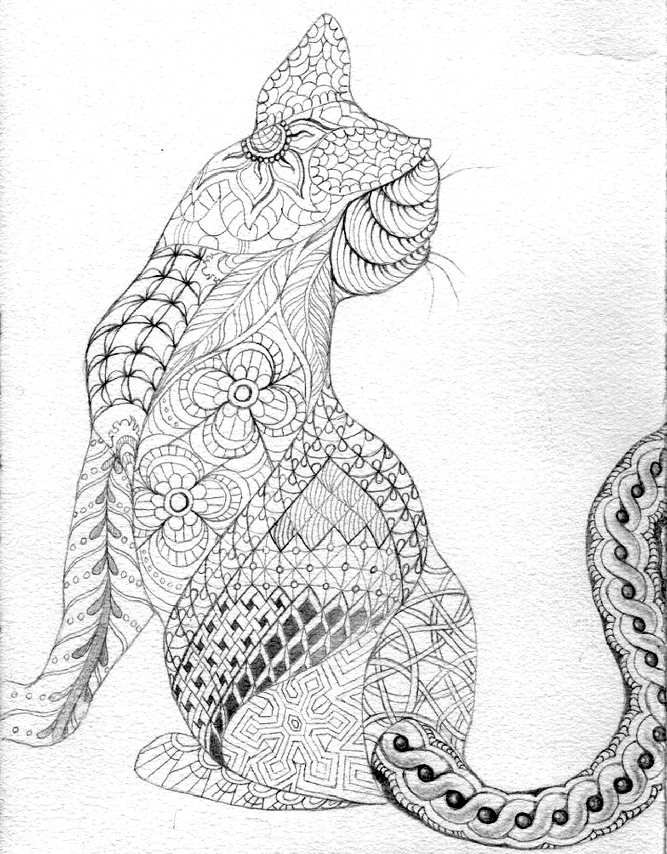 difficult cat from back animals coloring pages for adults