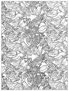 Coloring Adult Birds 2 Free To Print
