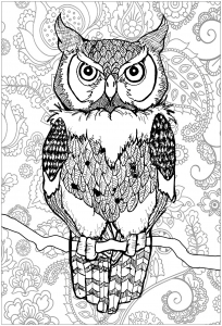 coloring piercing eyes owl with background