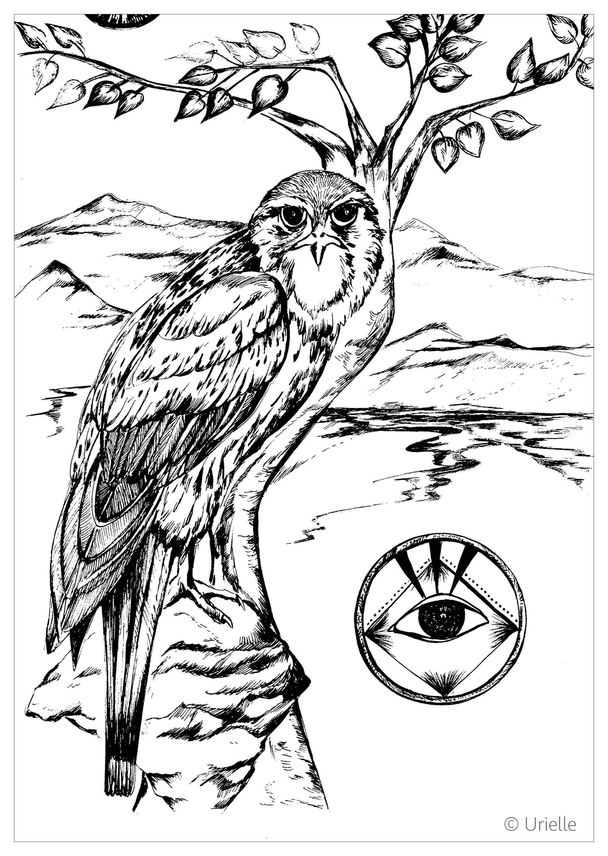 Falcon Birds Adult Coloring Pages