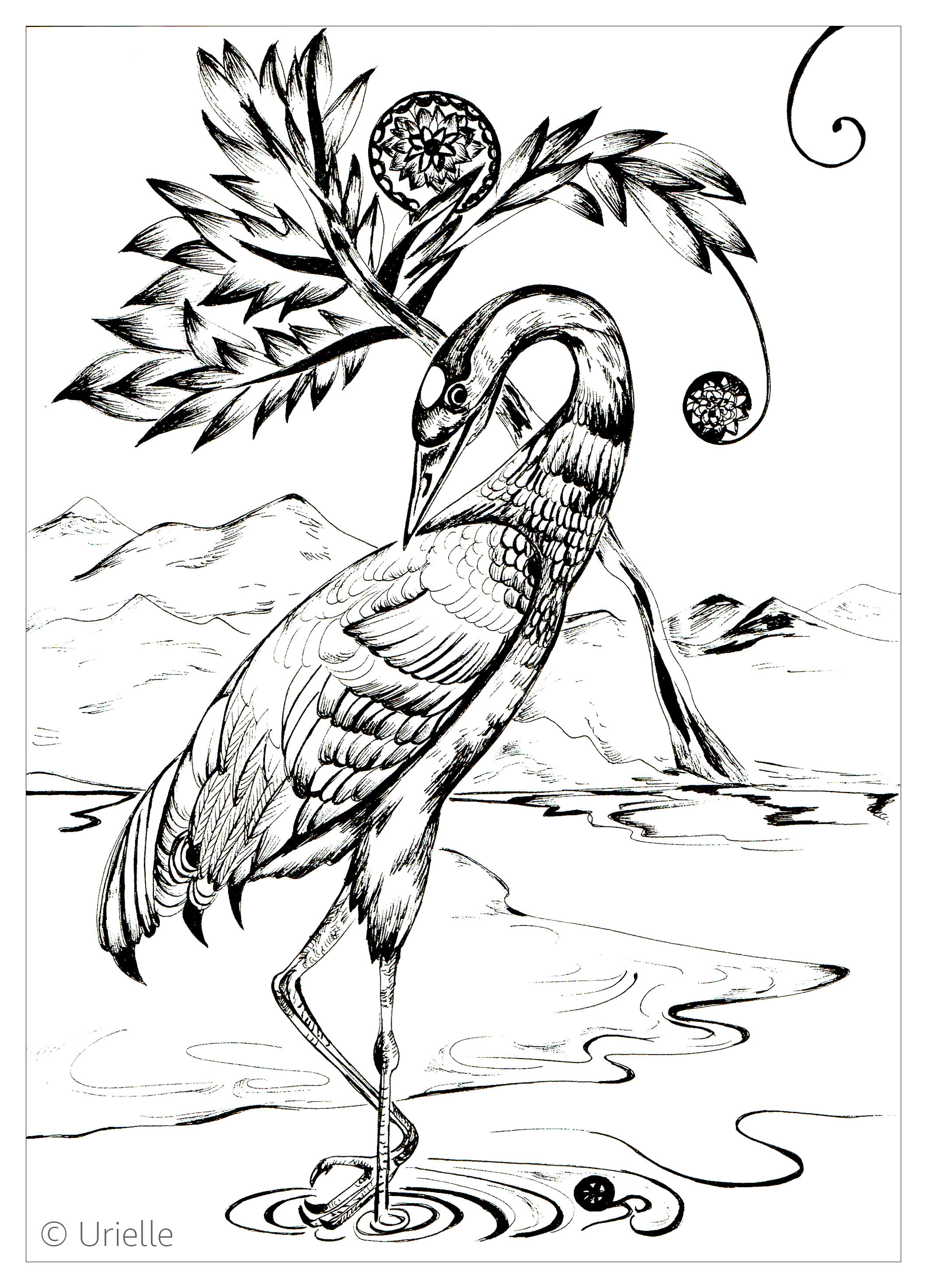 Heron Birds Adult Coloring Pages