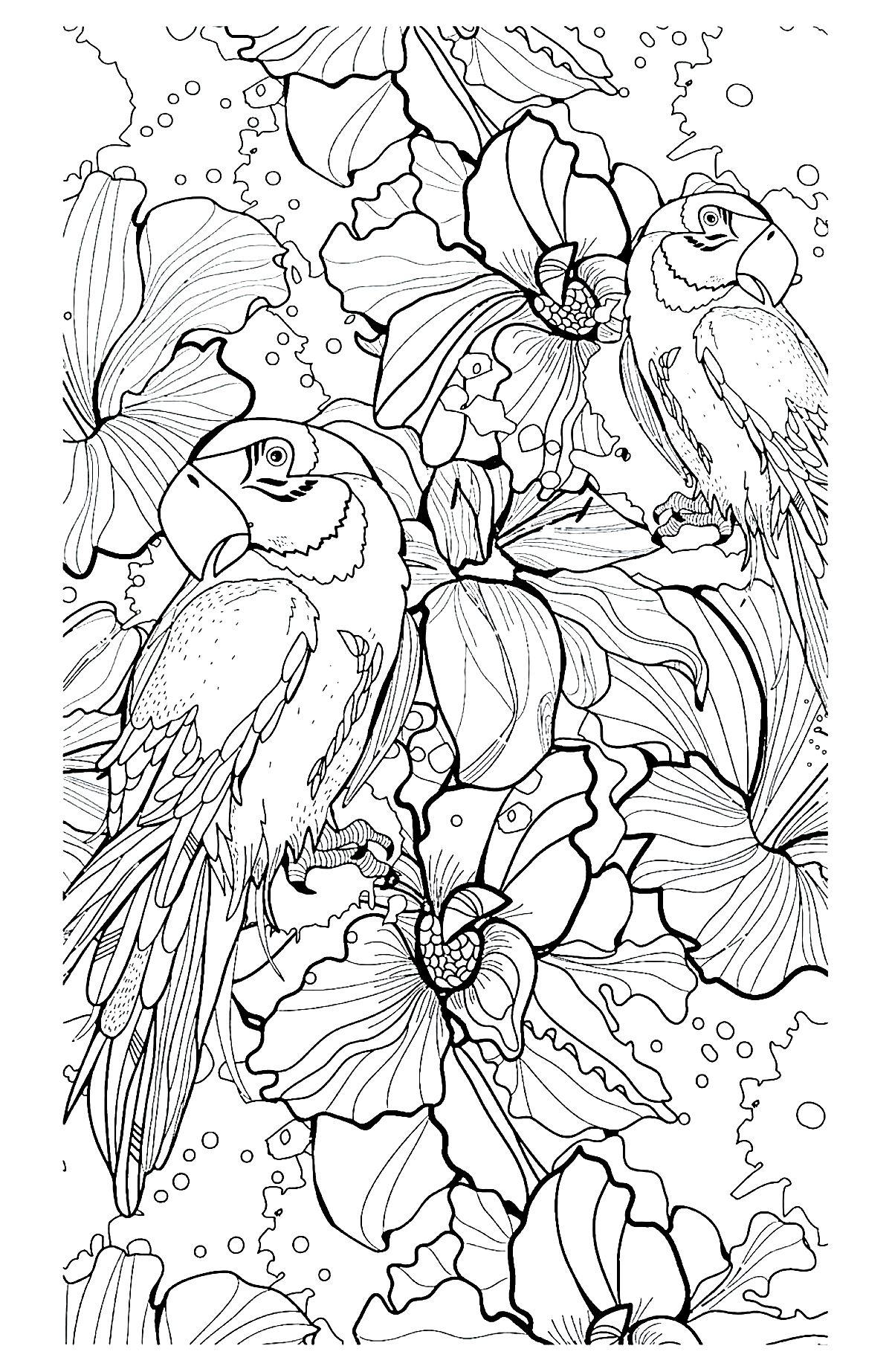 Complex coloring page of parrots