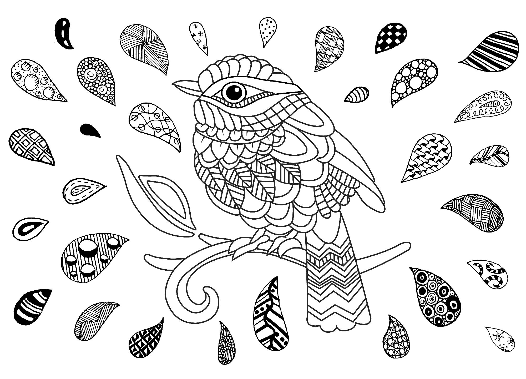 Bird and zentangle drop - Birds Adult Coloring Pages