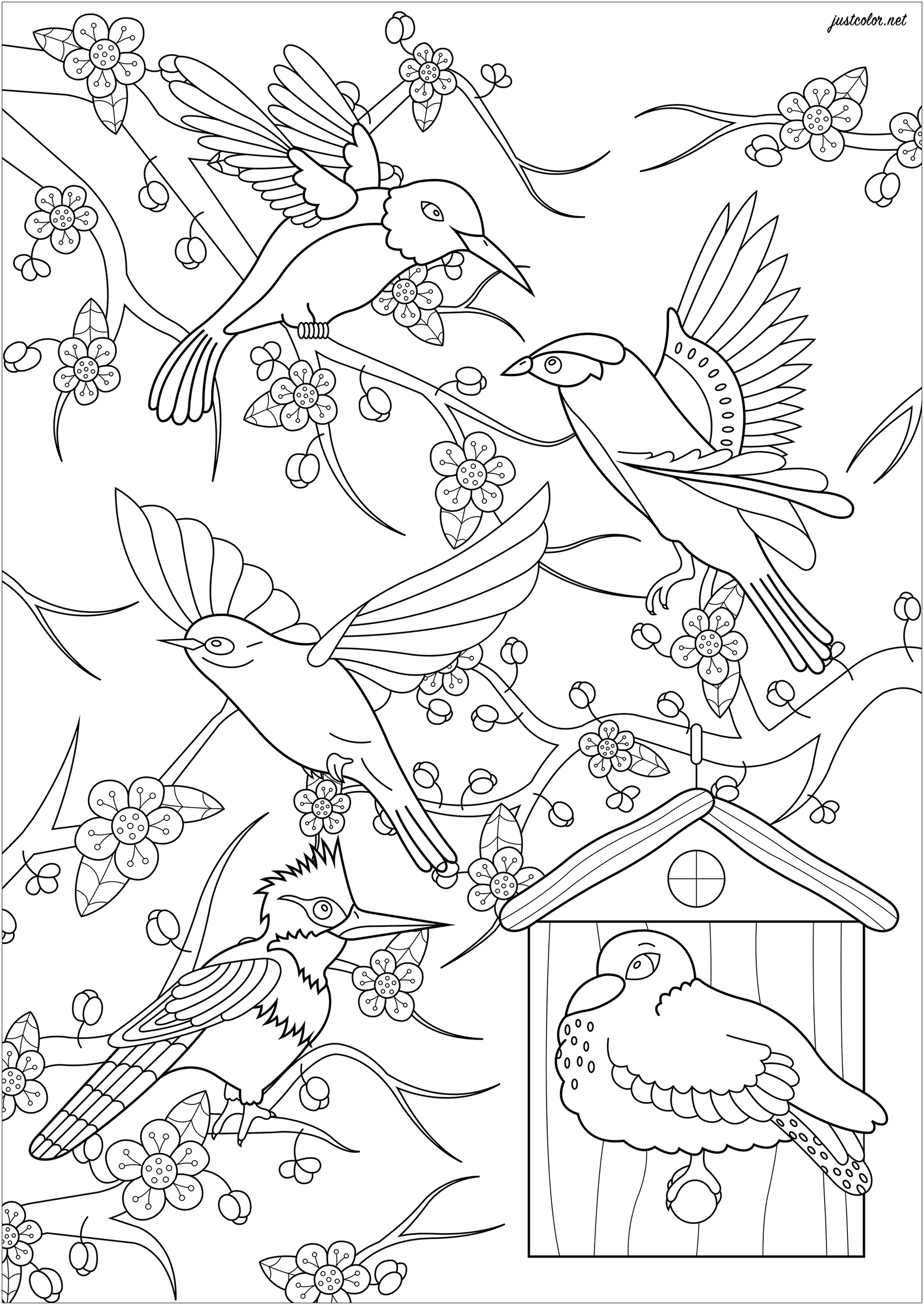 Color these five birds flying in front of a Japanese cherry tree