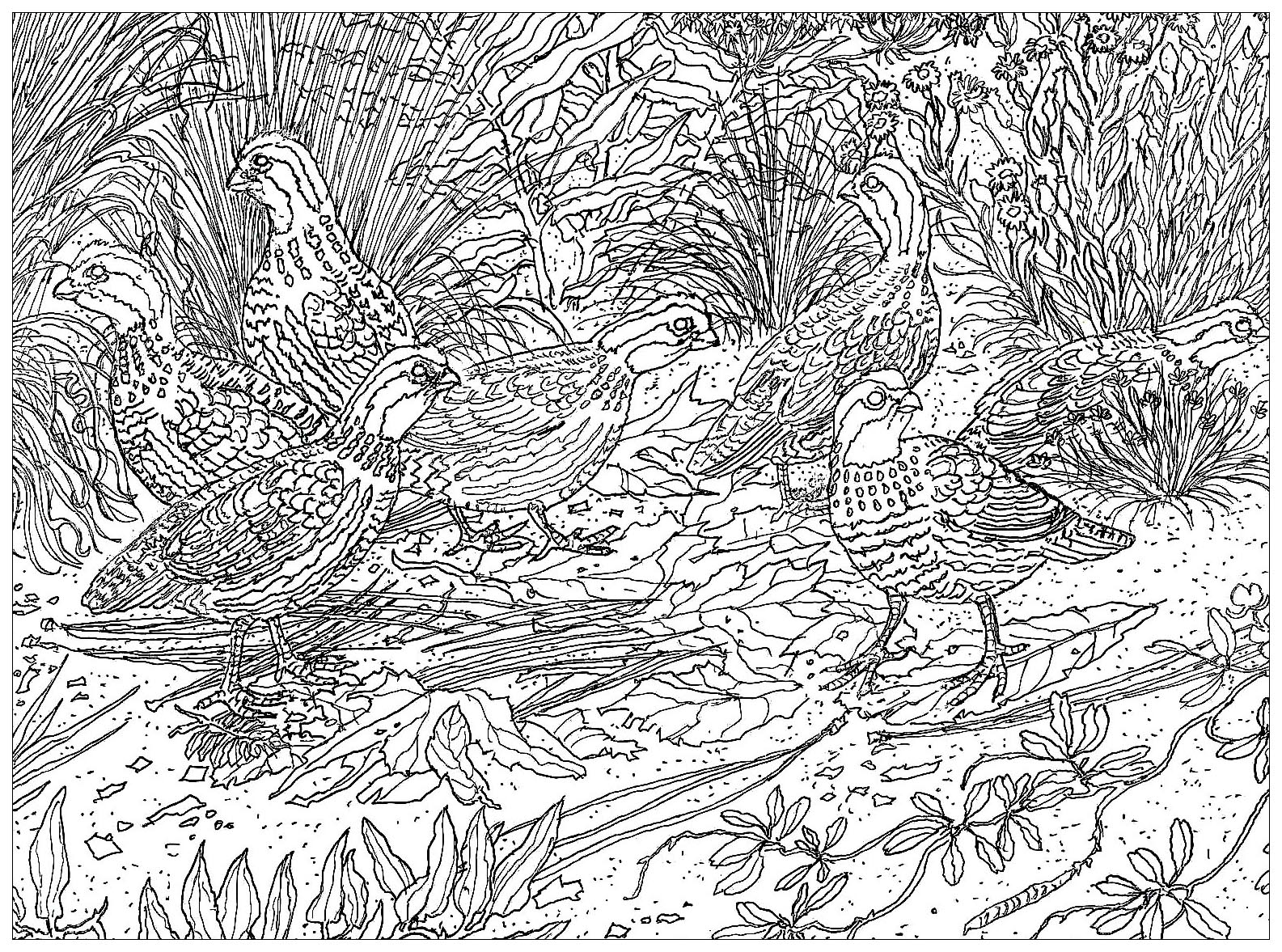 Birds on the ground, drawing made from a picture