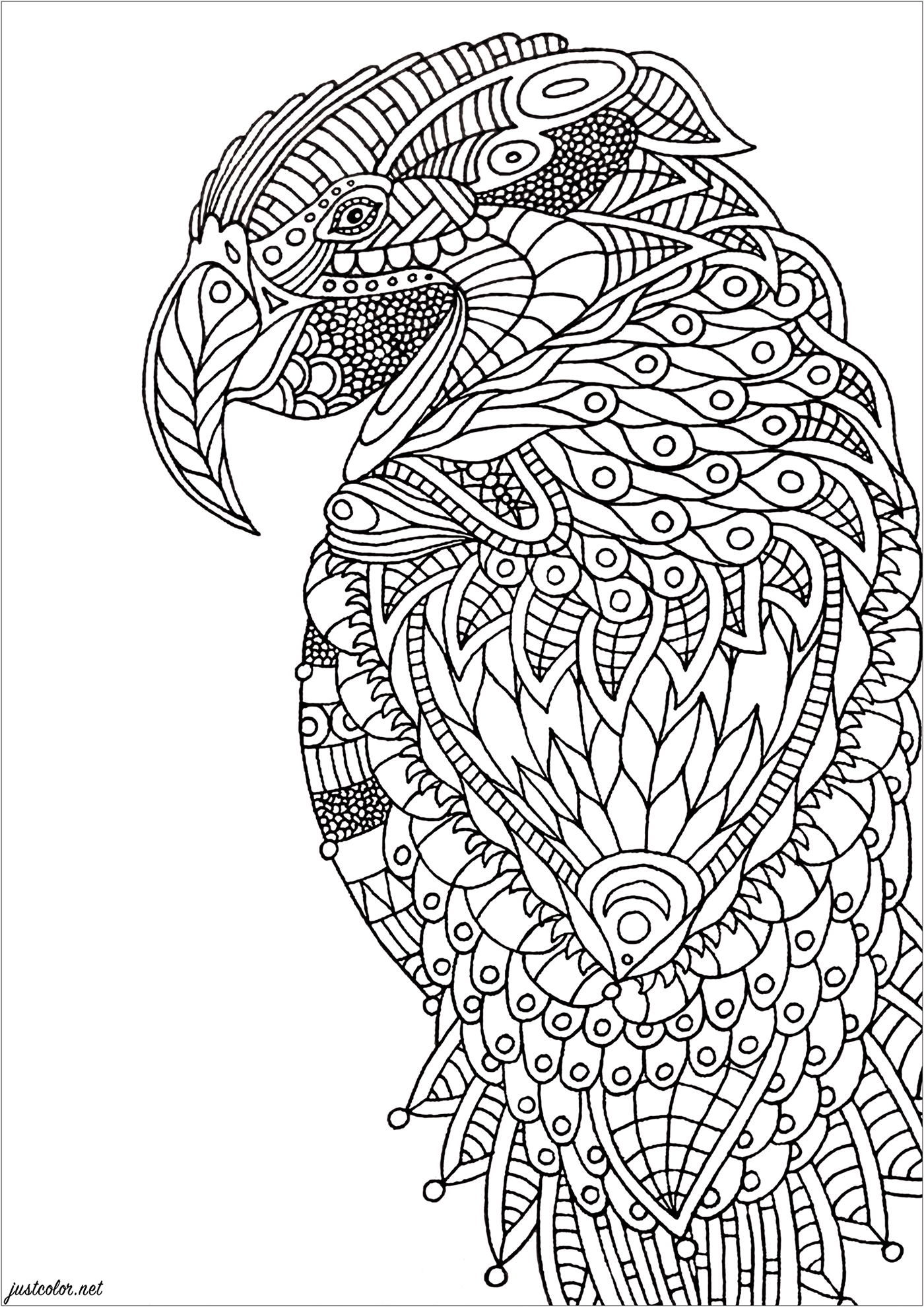 Color the various details of this Zentangle coloring page, representing a parrot
