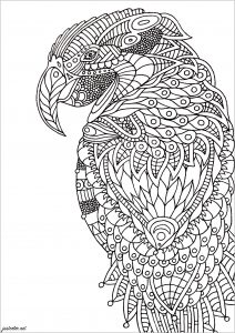 Coloring parrot zentangle