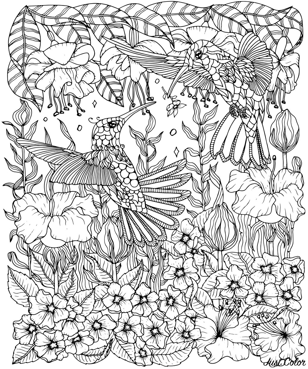 Color these beautiful Hummingbirds with complex and various types of flowers