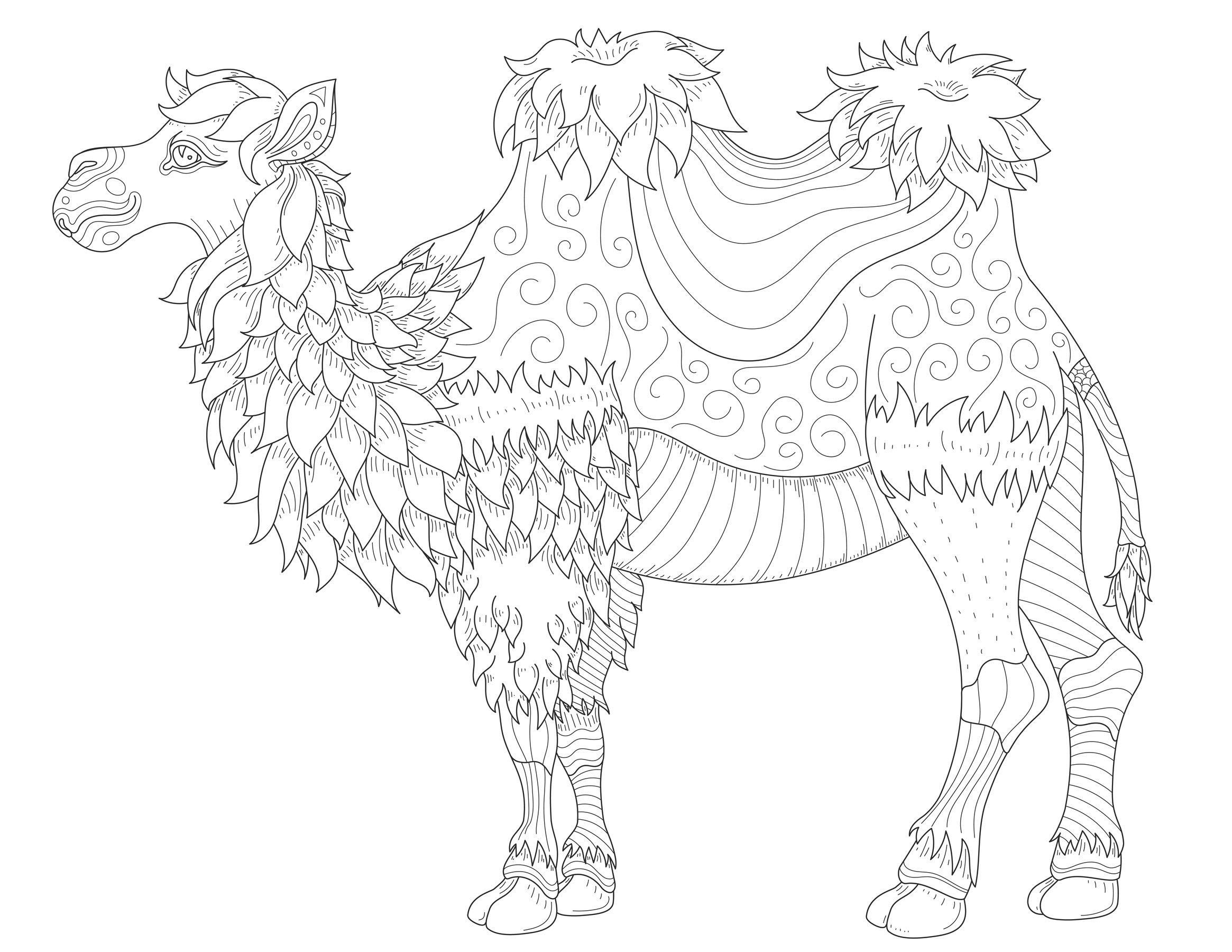 Camel with fine lines - Camels & Dromedaries Adult Coloring Pages