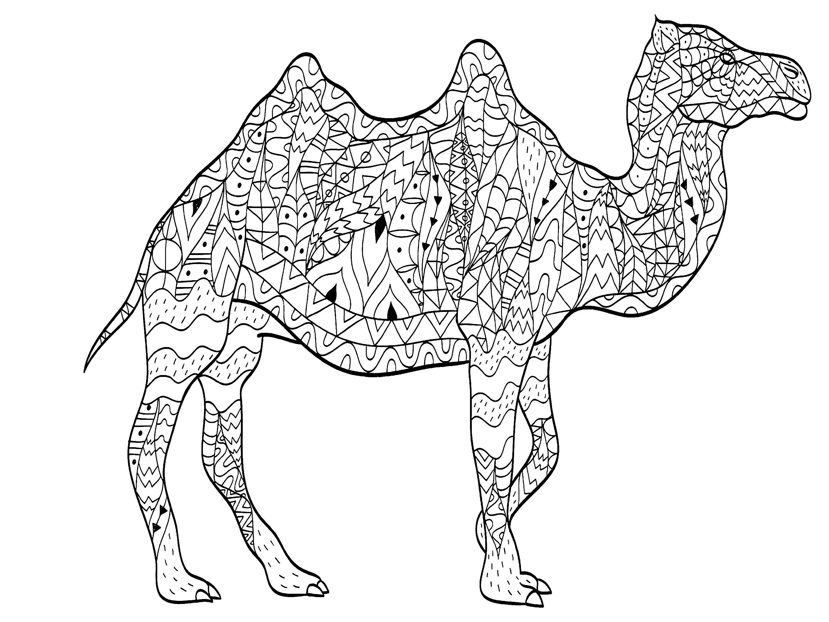 A Majestic Camel Drawn With Varied And Original Patterns