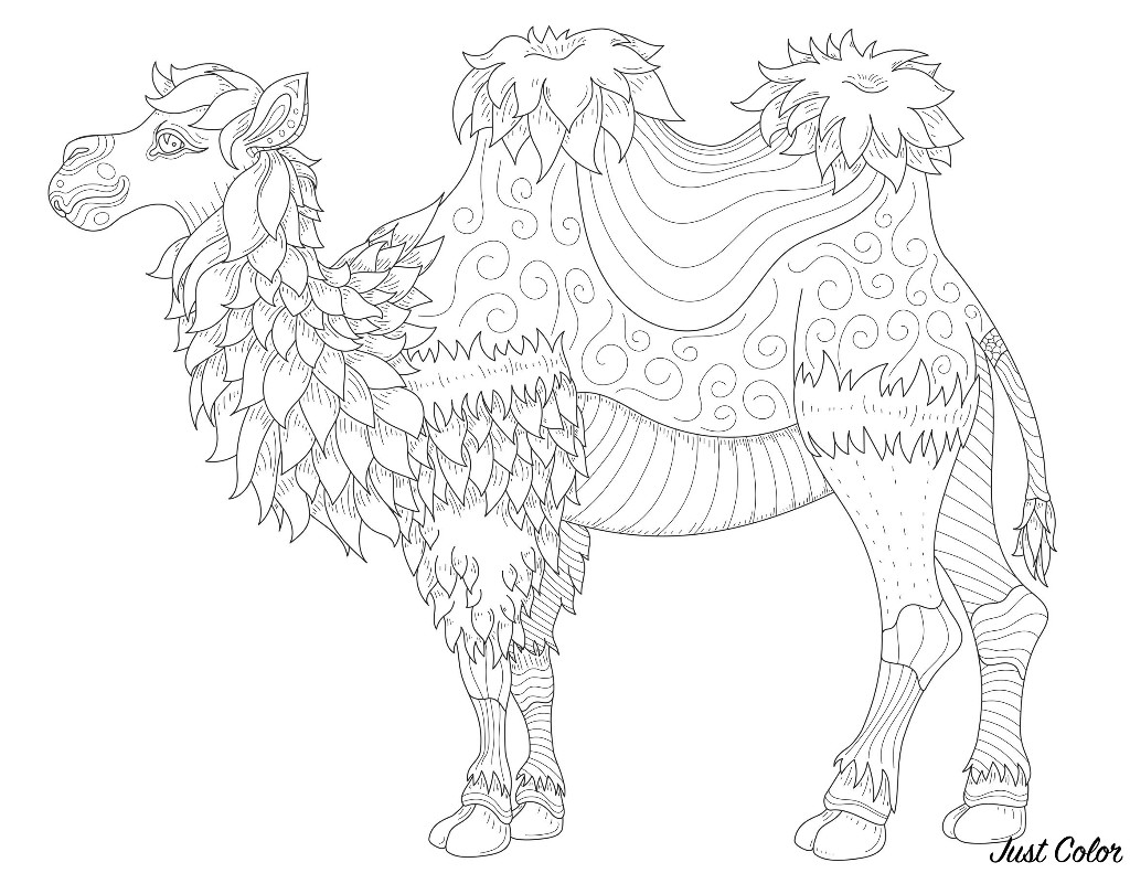 Camel With Fine Lines Camels Dromedaries Adult Coloring Pages