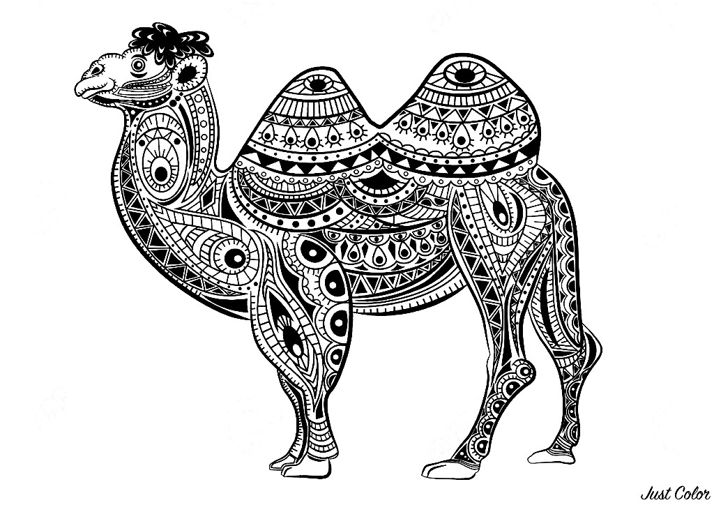 Nice camel whose body is made of Zentangle patterns