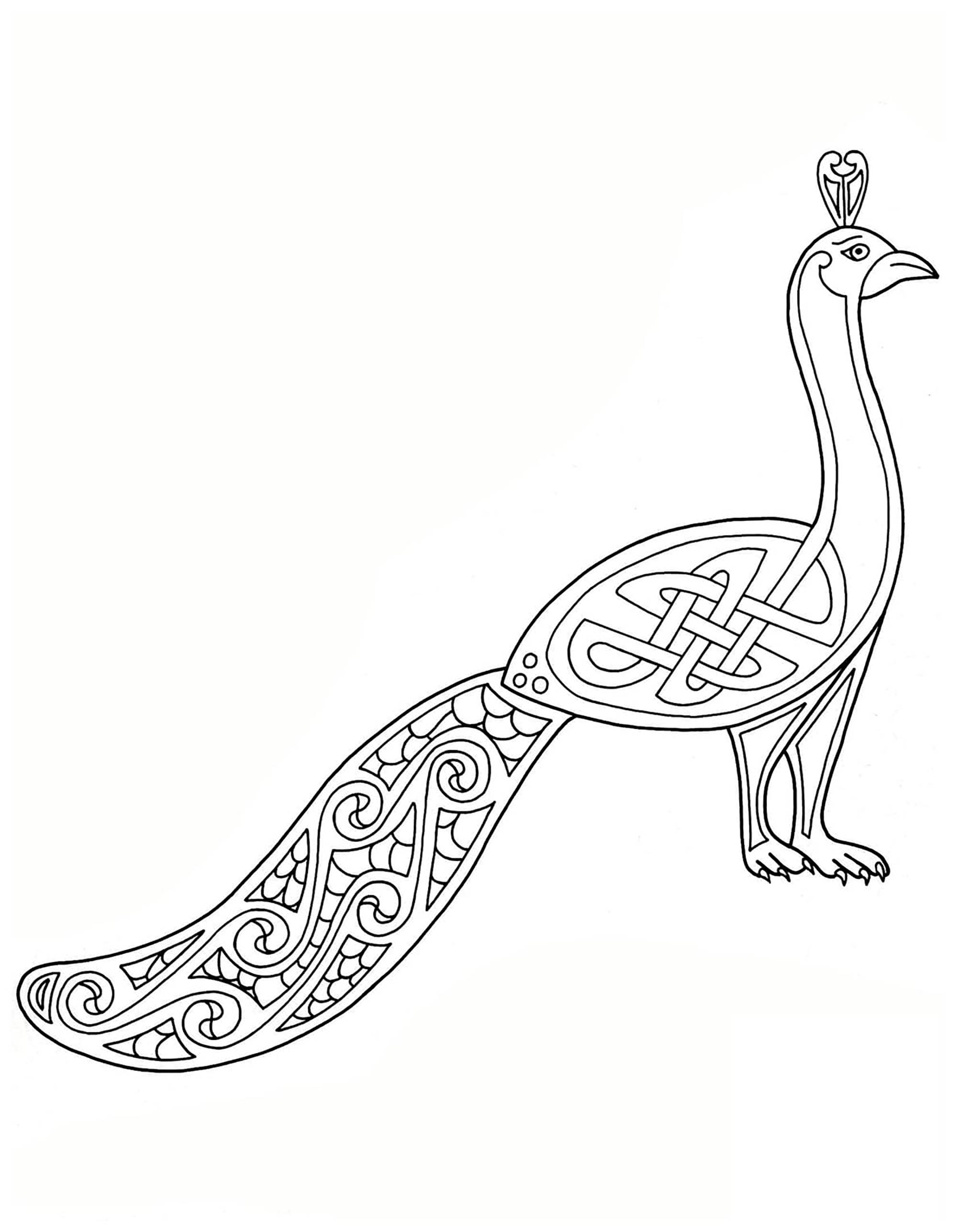 Peacock, drawn with Celtic Art style
