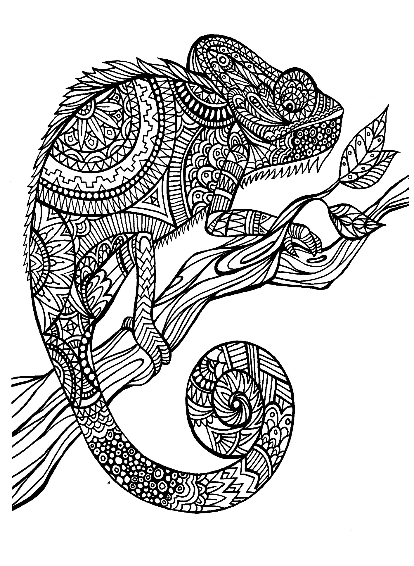 A magnificien cameleon to color, drawn with zentangle patterns