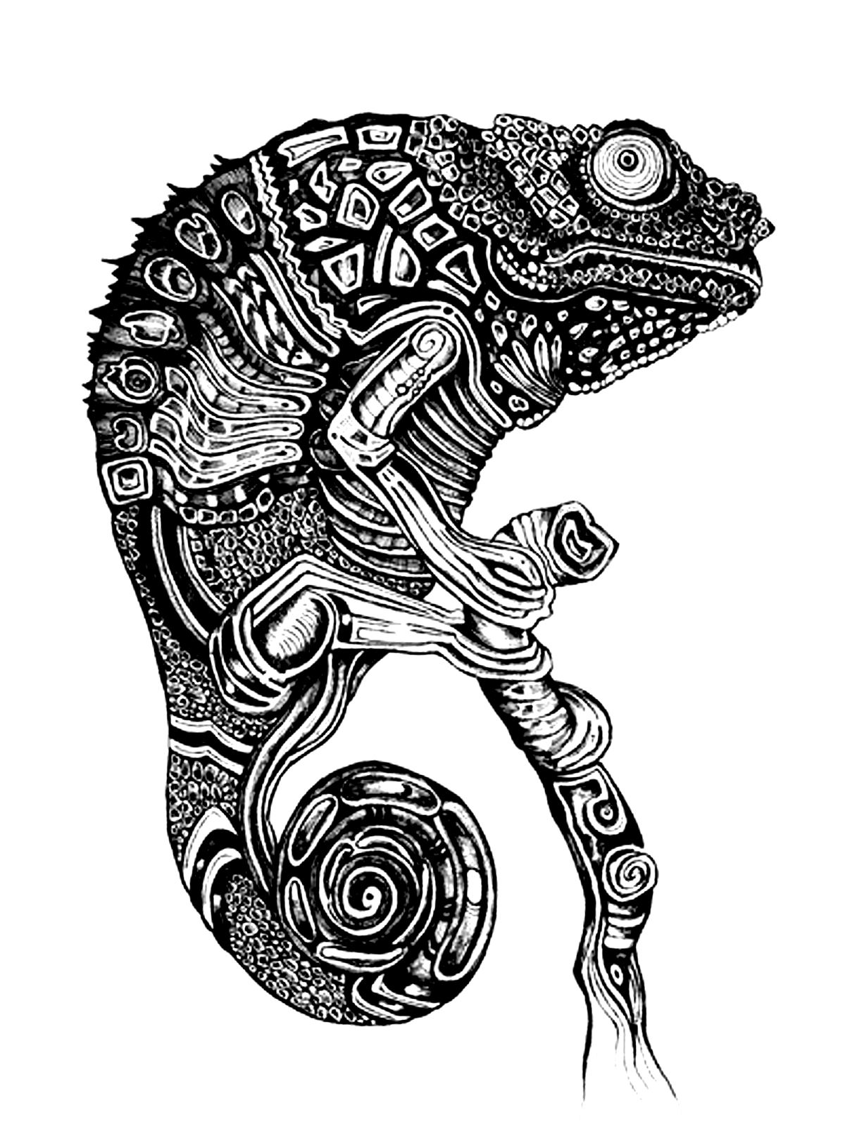 Very dark drawing to color of a cameleon
