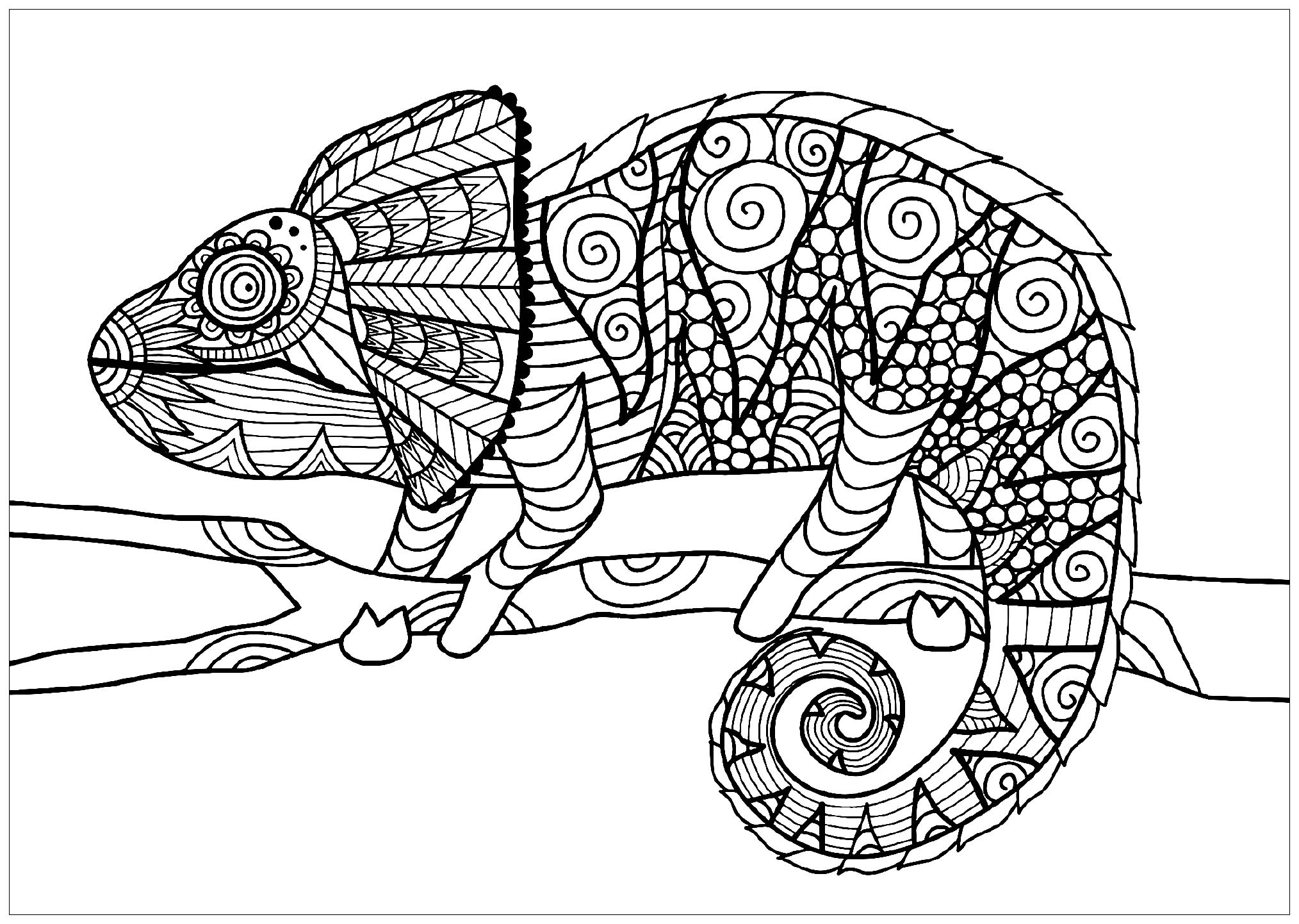 chameleon coloring pages free | Chameleon on branch - Chameleons & lizards Adult Coloring ...