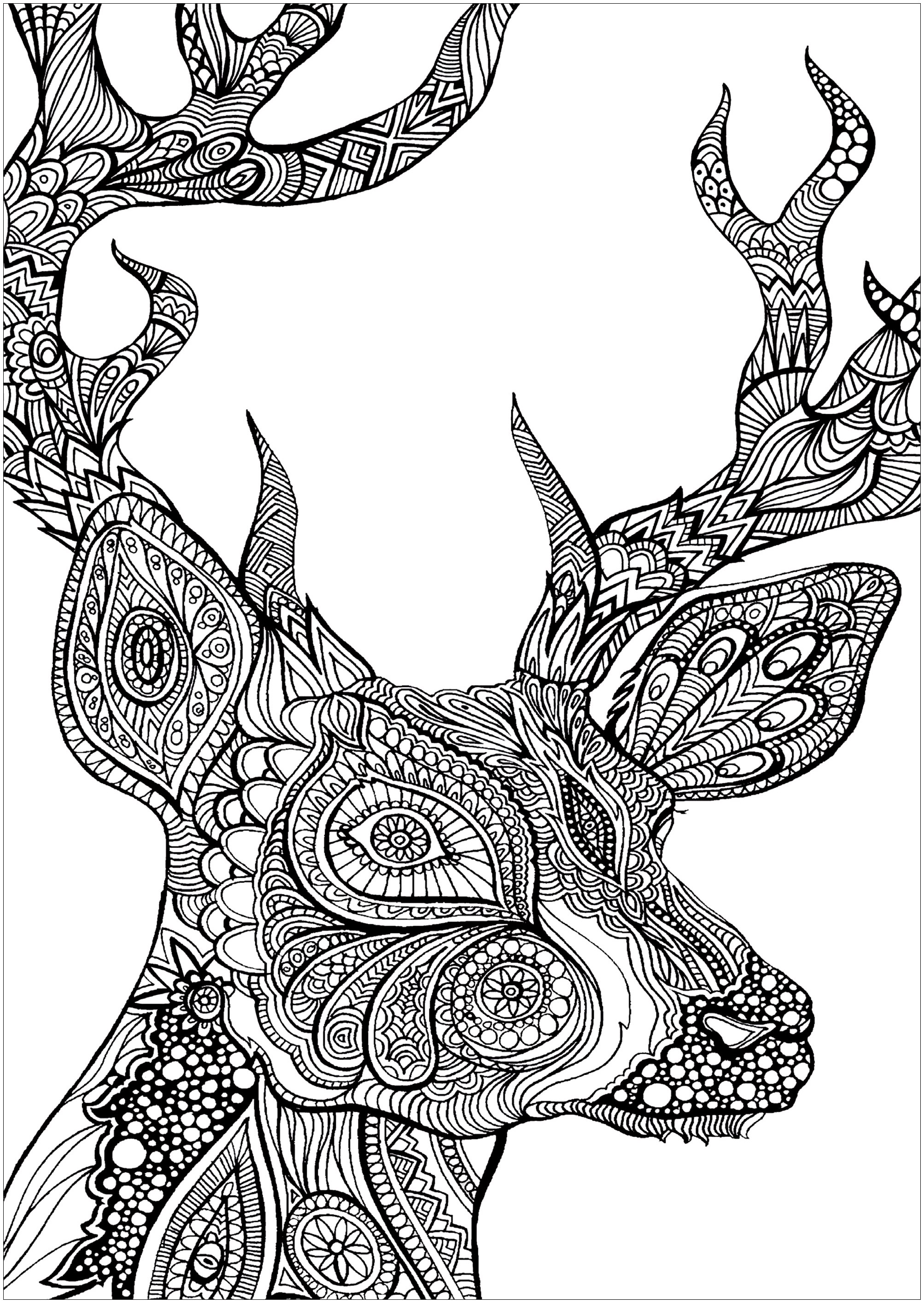 Deed head - Deers Adult Coloring Pages