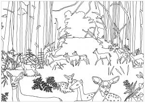 Coloring adult does and fawns in forest by marion c